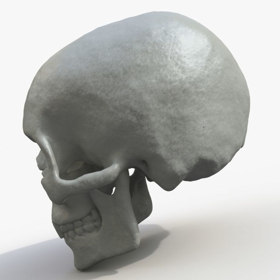 Fossilized human skull (voor 3D-printen) royalty-free 3d model - Preview no. 4
