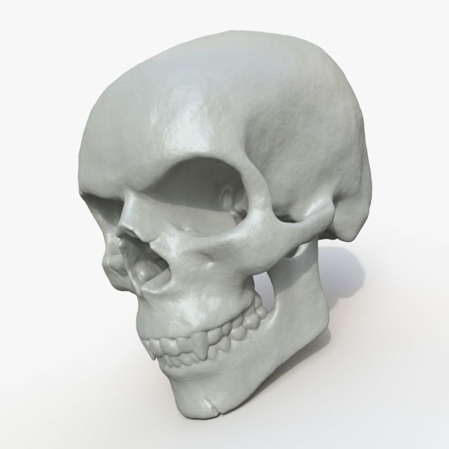 Fossilized human skull (voor 3D-printen) royalty-free 3d model - Preview no. 2