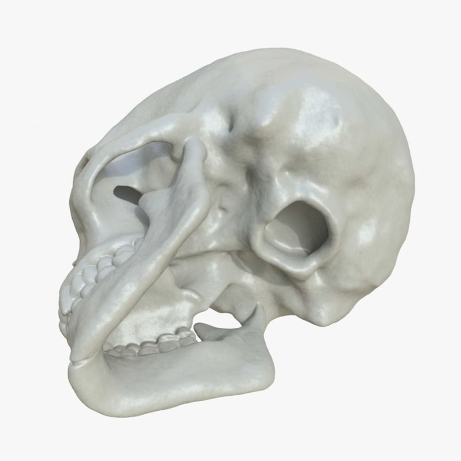 Fossilized human skull (voor 3D-printen) royalty-free 3d model - Preview no. 3