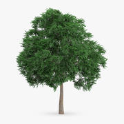 İsveçli Whitebeam Ağacı 10.8m 3d model