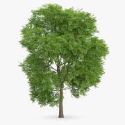 Wild Service Tree 9.7m 3d model