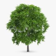 ナナカマドの木7m 3d model