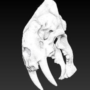 動物の頭蓋骨 3d model