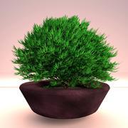 Arbuste en pot 1 3d model