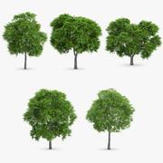 5 drzew jarzębiny 3d model