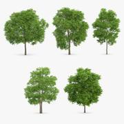 5 alberi selvaggi di servizio 3d model