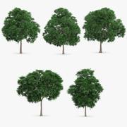5 alberi a raggio bianco svedesi 3d model