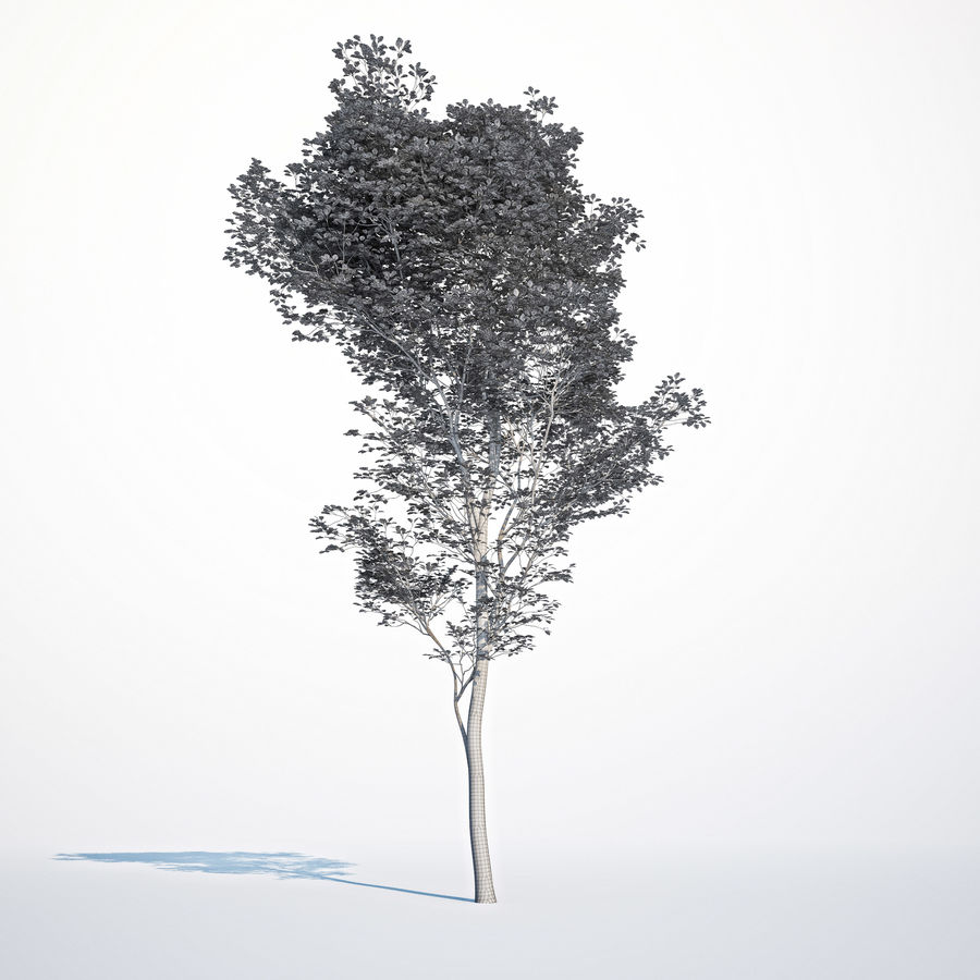 Harnbeam树(Carpinus Betulus)-B型 royalty-free 3d model - Preview no. 9