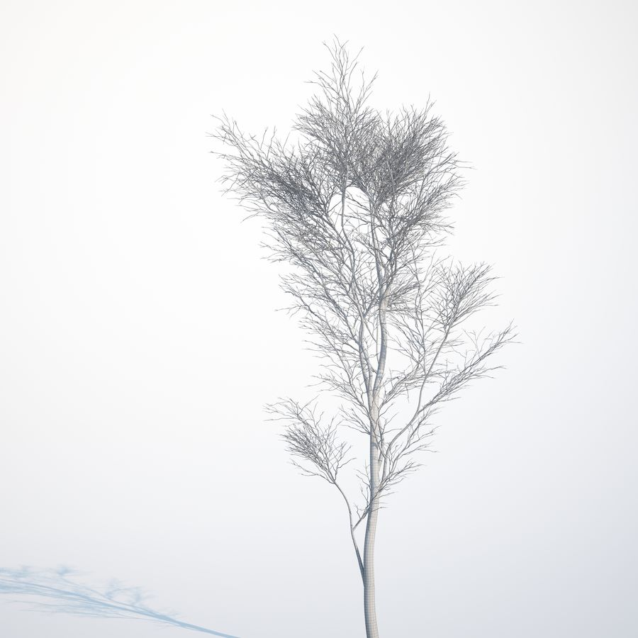 Harnbeam树(Carpinus Betulus)-B型 royalty-free 3d model - Preview no. 10