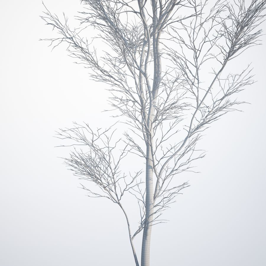 Harnbeam树(Carpinus Betulus)-B型 royalty-free 3d model - Preview no. 11