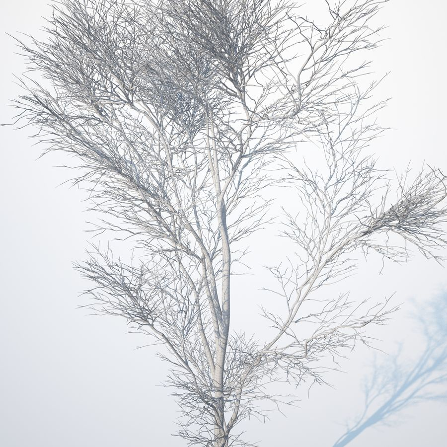 Harnbeam树(Carpinus Betulus)-B型 royalty-free 3d model - Preview no. 12