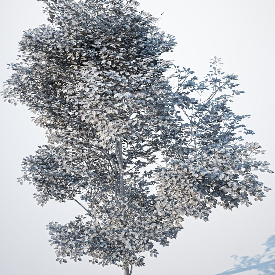 Harnbeam树(Carpinus Betulus)-B型 royalty-free 3d model - Preview no. 8