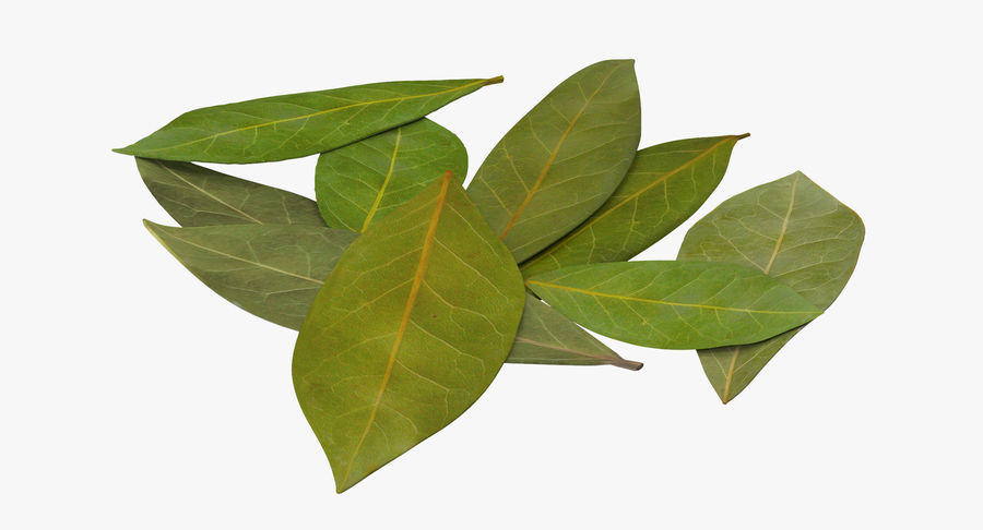Bay Leaves royalty-free 3d model - Preview no. 2