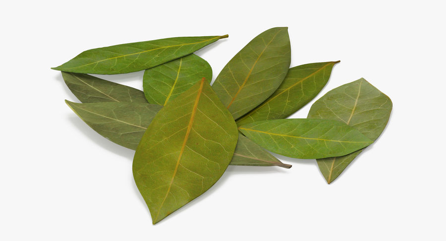 Bay Leaves royalty-free 3d model - Preview no. 3