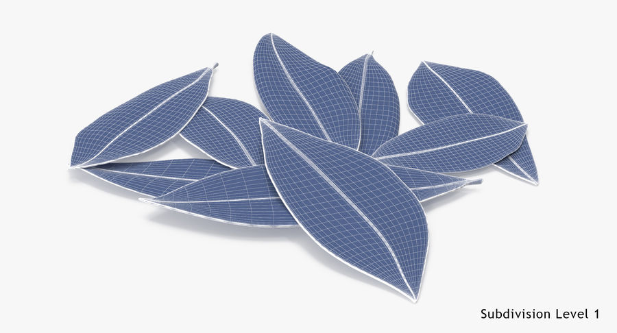 Bay Leaves royalty-free 3d model - Preview no. 12