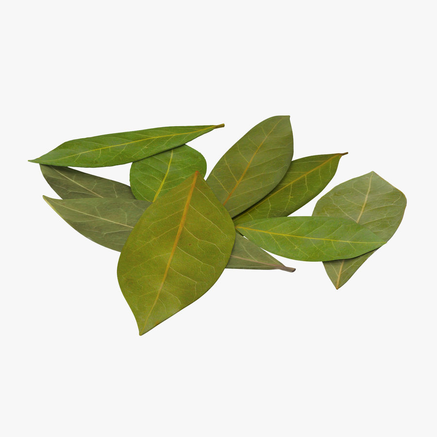 Bay Leaves royalty-free 3d model - Preview no. 1