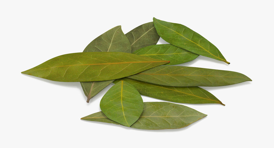 Bay Leaves royalty-free 3d model - Preview no. 5