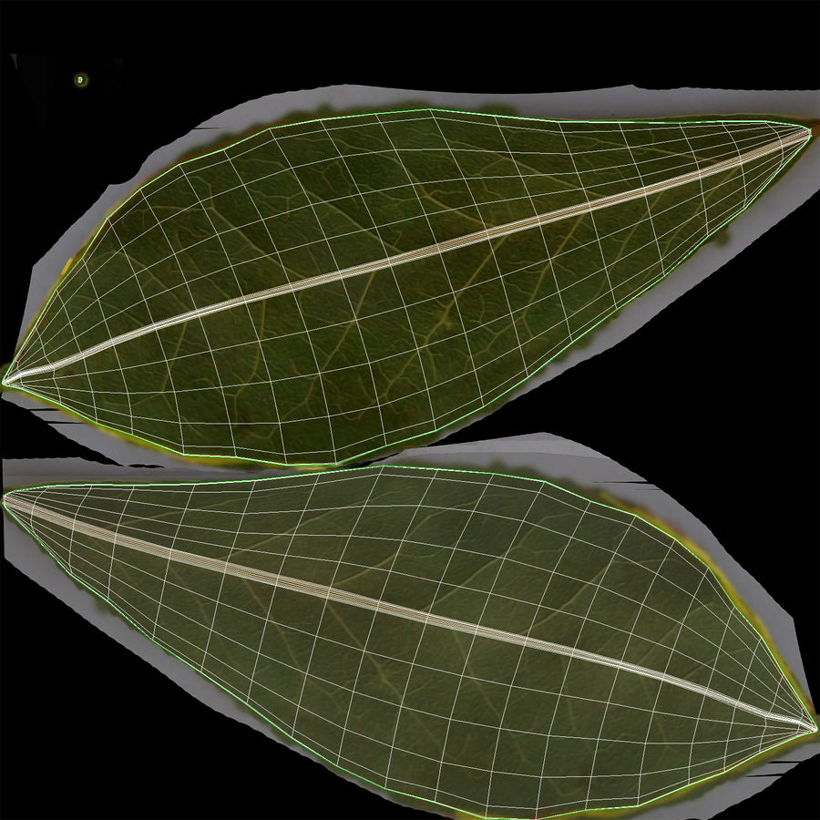 Bay Leaves royalty-free 3d model - Preview no. 13