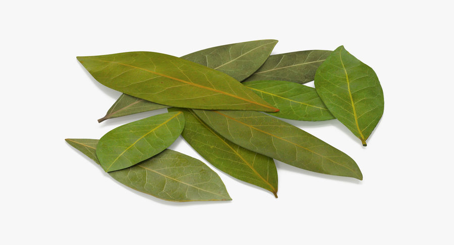 Bay Leaves royalty-free 3d model - Preview no. 6