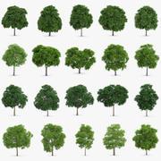 20花or树集合 3d model