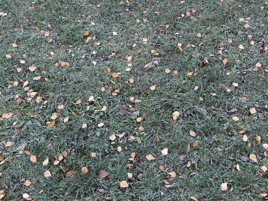 Prato di erba congelata 16K (2) royalty-free 3d model - Preview no. 3