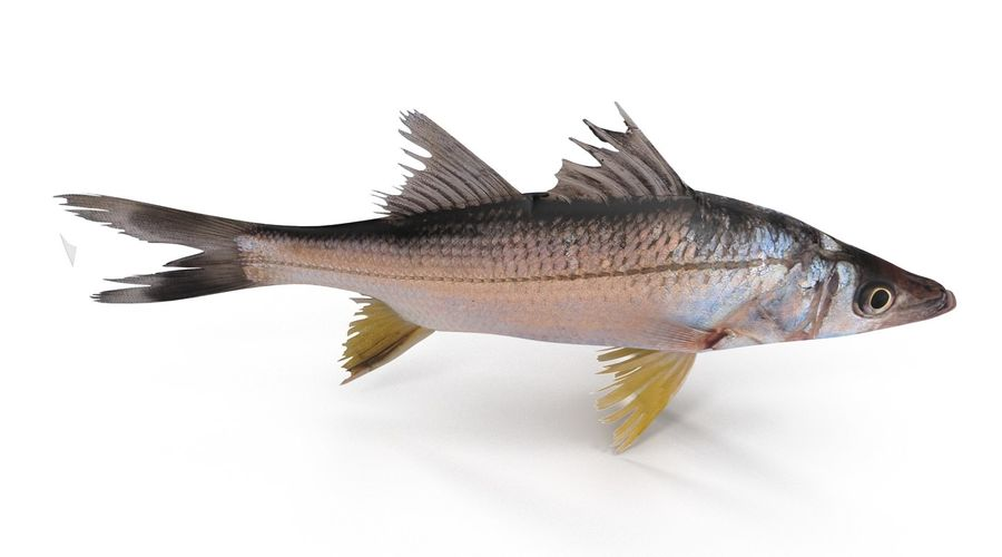 Yellowfin Snook royalty-free 3d model - Preview no. 7