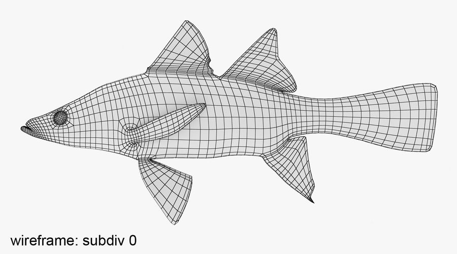Yellowfin Snook royalty-free 3d model - Preview no. 8