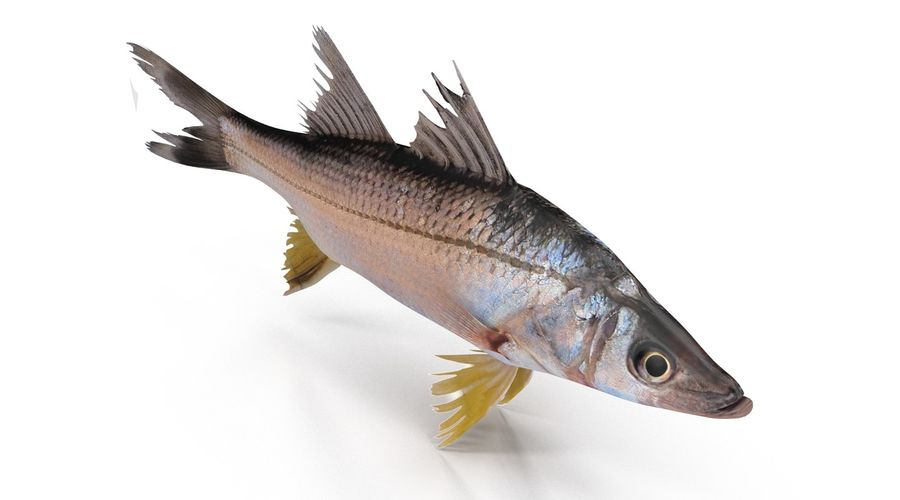 Yellowfin Snook royalty-free 3d model - Preview no. 5