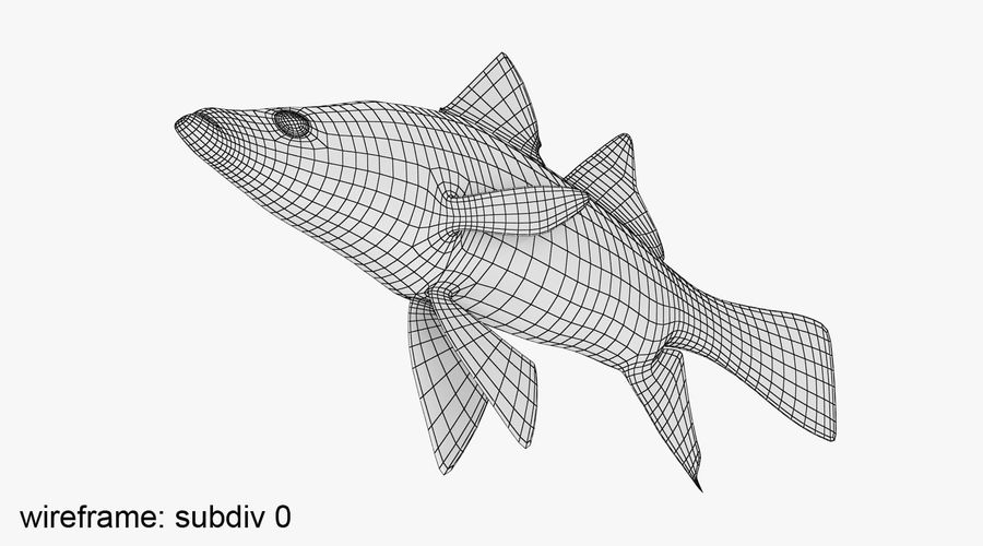 Yellowfin Snook royalty-free 3d model - Preview no. 9