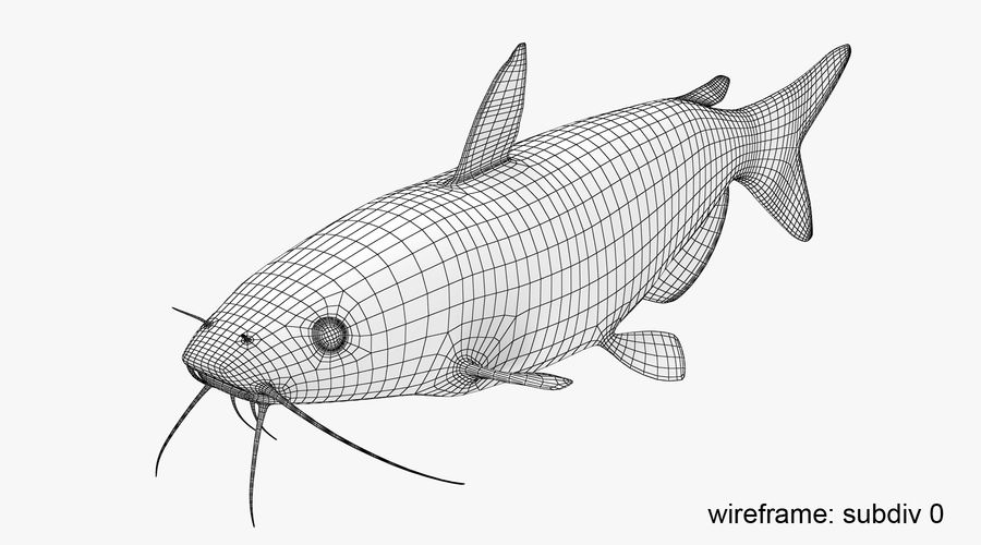 Channel Catfish royalty-free 3d model - Preview no. 12