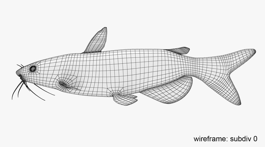Channel Catfish royalty-free 3d model - Preview no. 11