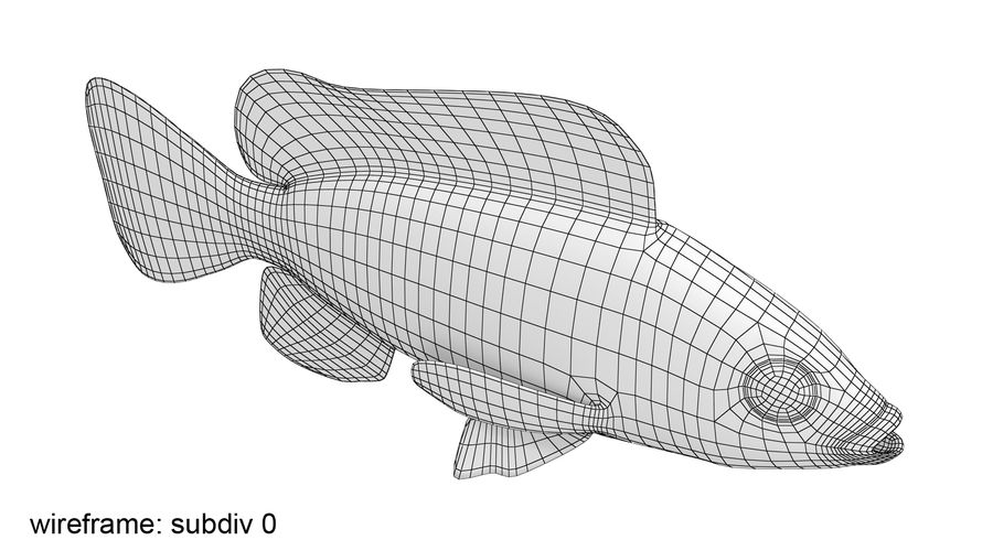 Tilapia royalty-free 3d model - Preview no. 11