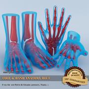 手と足の解剖学 3d model
