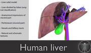 Menschliche Leber 3d model