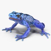 Pijlgifkikker blauw 3d model