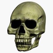 Talking Skull 3d model