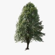 Forest Tree 02 Lowpoly 3d model