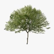 Forest Tree 03 Lowpoly 3d model
