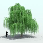 Willow Tree_0001 3d model