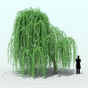 Willow Tree_003 3d model