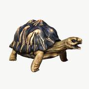 Излученная черепаха 3d model