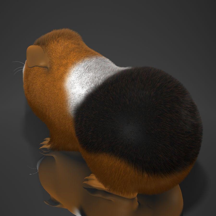 Świnka morska (Cavia porcellus) Rigged royalty-free 3d model - Preview no. 8