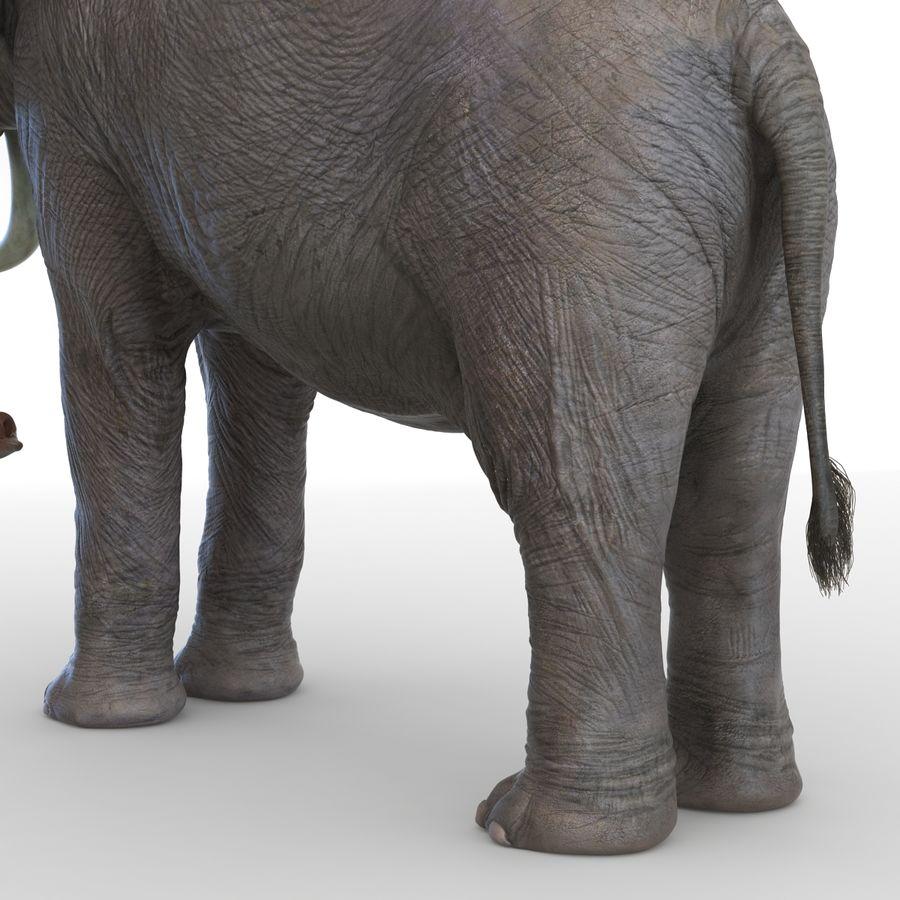 Éléphant gréé royalty-free 3d model - Preview no. 47