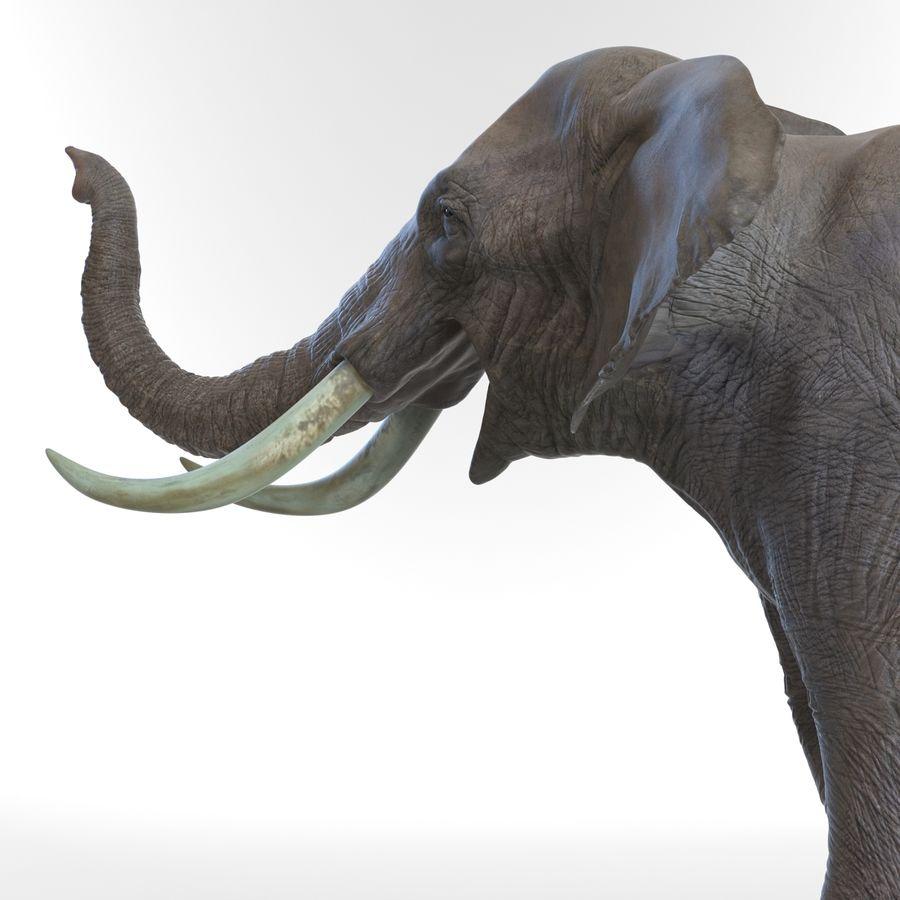 Éléphant gréé royalty-free 3d model - Preview no. 41
