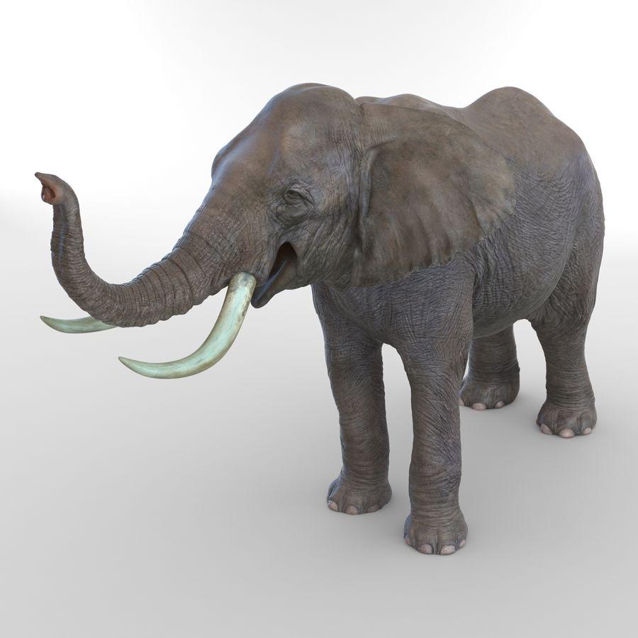 Éléphant gréé royalty-free 3d model - Preview no. 31