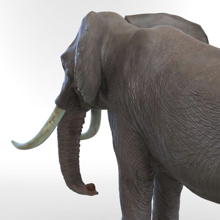 Éléphant gréé royalty-free 3d model - Preview no. 46