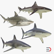 サメコレクション4 3d model