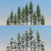 10 + 10 Picea Engelmannii 나무 3d model