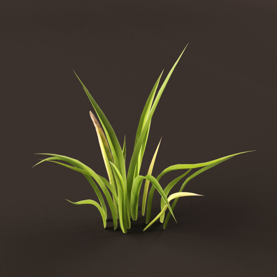 Grass Clump royalty-free 3d model - Preview no. 5