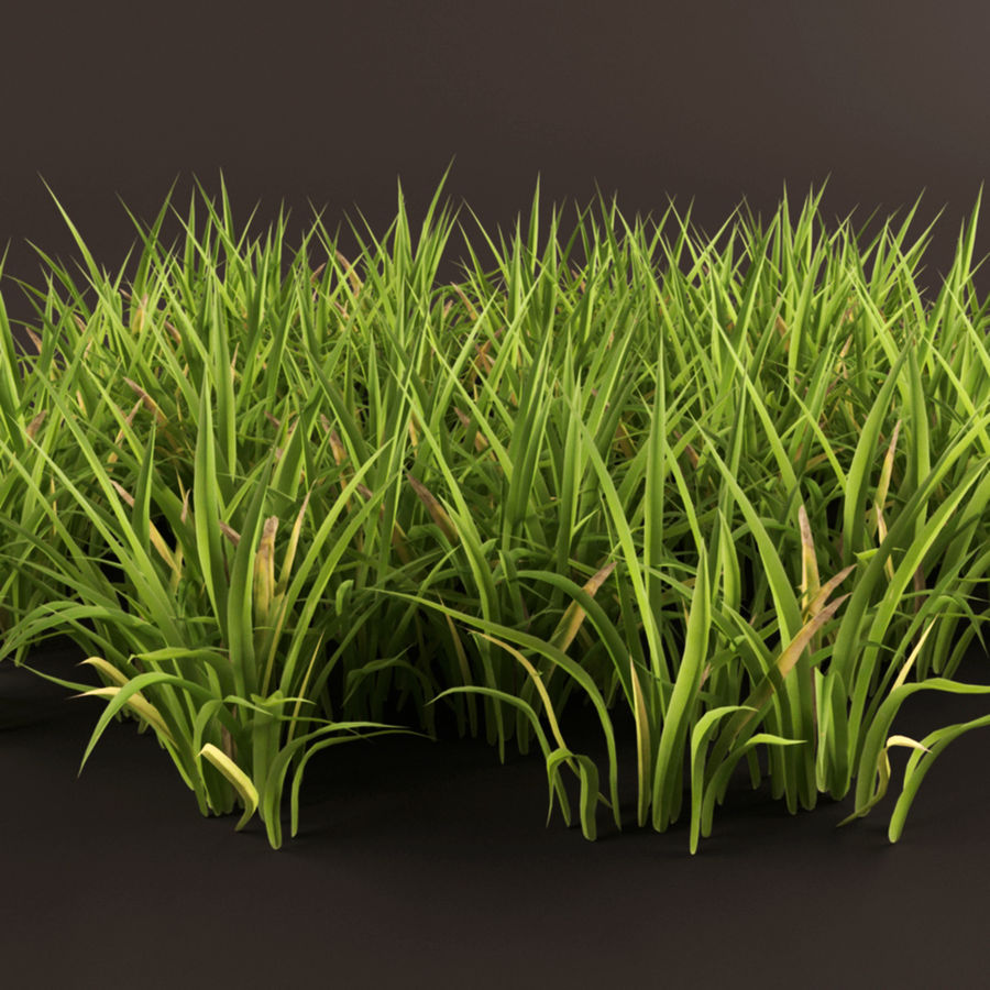 Grass Clump royalty-free 3d model - Preview no. 8